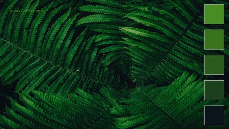 Monochromatic Color Scheme Inspiration 1 - Green Forest